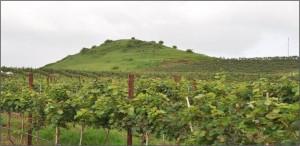 Charosa wineries