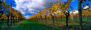 Leeuwin Estate Winery, Margaret River